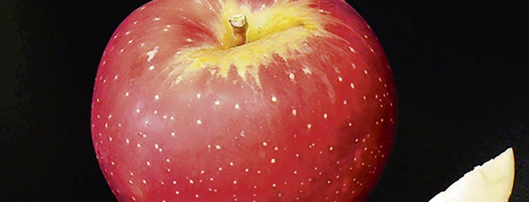 Une belle pomme d'une des nouvelles variétés de pommes à cidre québécoises