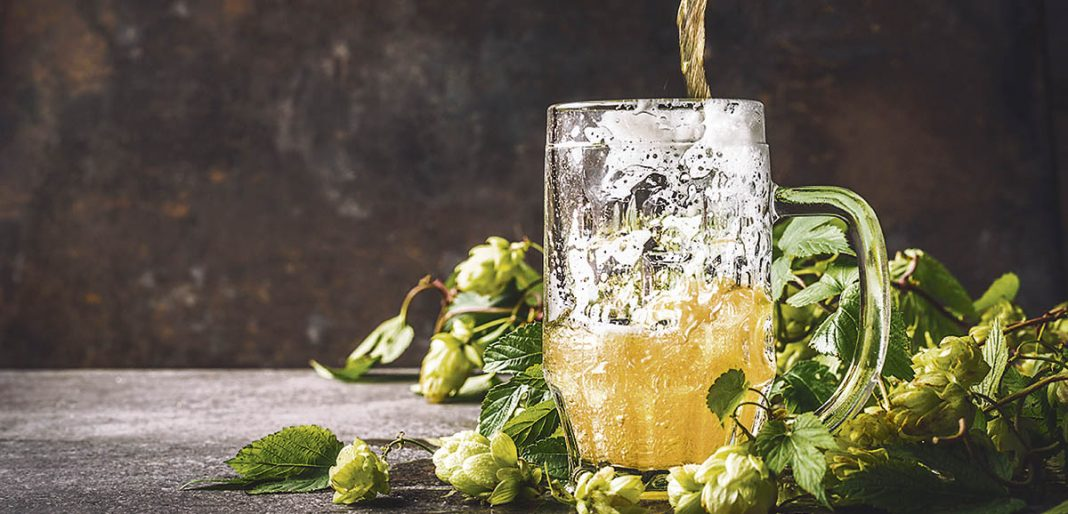 Une bière versée dans un bock entouré des cocotes de houblons frais