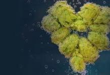 un coeur en houblon