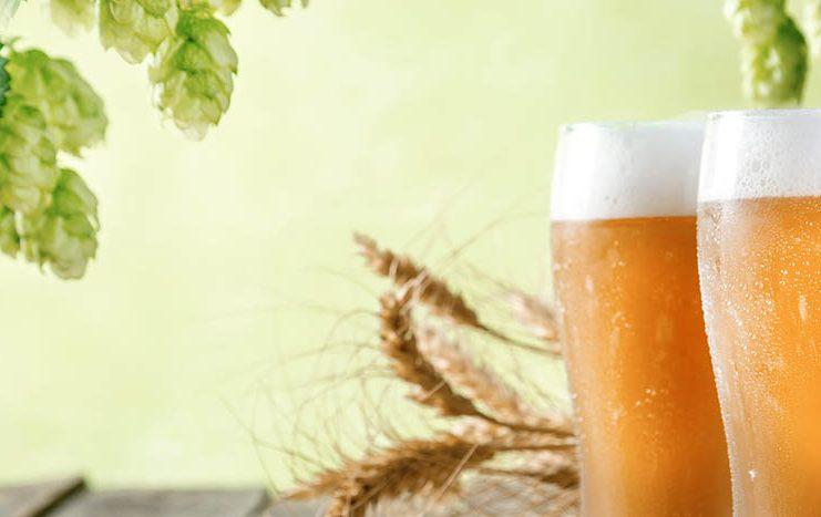 Houblons, gerbe d'orge et bières blondes rassemblés sur une même image